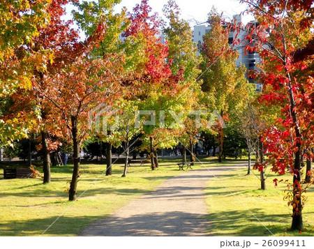 秋の散歩道 26099411