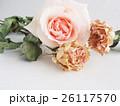 バラ ドライフラワー 花の写真 26117570