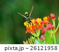 生物,昆蟲,昆蟲,蜜蜂,虎斑泥壺蜂 26121958