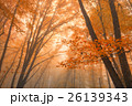 Beautiful autumn forest 26139343