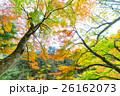 【紅葉】秋 イメージ【紅葉】秋 イメージ 26162073