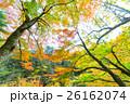 【紅葉】秋 イメージ【紅葉】秋 イメージ 26162074