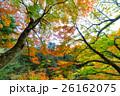 【紅葉】秋 イメージ【紅葉】秋 イメージ 26162075