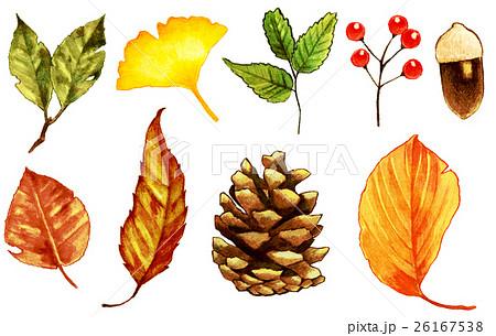 秋 枯れ葉木の実イラストのイラスト素材 26167538 Pixta
