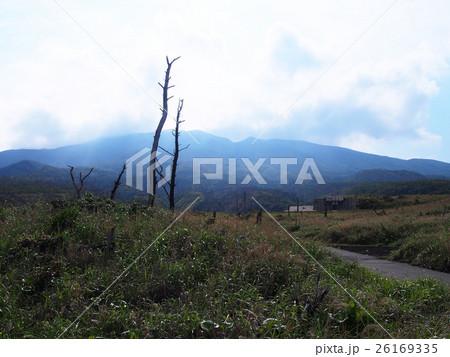 三宅島 サタドー岬の枯れ木 26169335