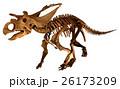 トリケラトプス化石骨格 (背景切り抜き) 26173209
