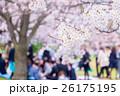 ソメイヨシノ 花見 春の写真 26175195