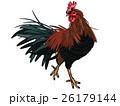 鶏 雄鶏 鳥のイラスト 26179144