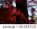 佛通寺の紅葉(赤) 26193310