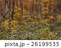 黄葉と降雪 26199535