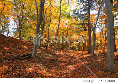 眺海の森 紅葉 26210889