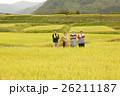 お米の収穫 ポートレート 26211187