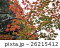 箕面秋の紅葉 26215412