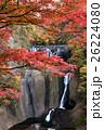 袋田の滝の紅葉 26224080