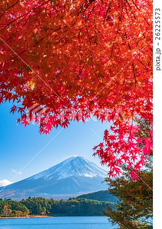 紅葉・富士山 26225573