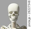 骨格 骨 髑髏のイラスト 26227348
