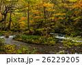 秋の奥入瀬渓流 26229205