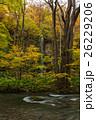 秋の奥入瀬渓流 26229206