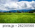 藍天稻田 26230560