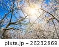 ゆき スノー 雪の写真 26232869