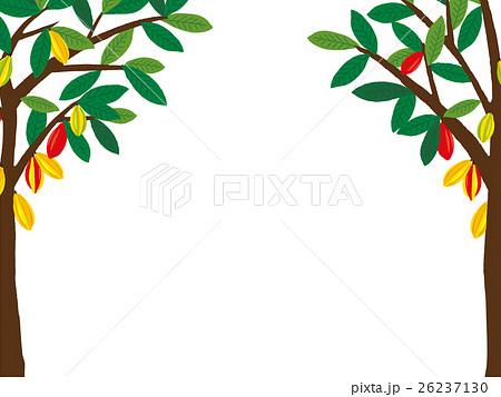 バレンタイン カカオの木  26237130
