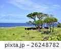 海 沖縄 自然の写真 26248782