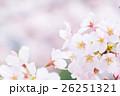桜 そめいよしの さくら クローズアップ 接写 コピースペース 26251321
