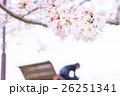 桜 そめいよしの さくら クローズアップ 接写 コピースペース 26251341