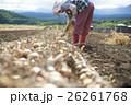農業イメージ 野菜の収穫 26261768