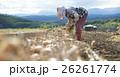 農業イメージ 野菜の収穫 26261774