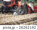 農業 収穫 玉ねぎの写真 26262192
