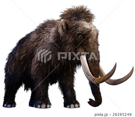 Mammoth 26265249