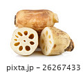 Lotus root on white background 26267433