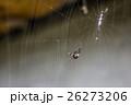 クモ 蜘蛛 スパイダーの写真 26273206