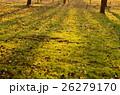 落ち葉 芝生 影の写真 26279170