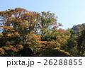 奥多摩 秋 紅葉の写真 26288855