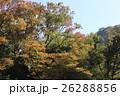 奥多摩 秋 紅葉の写真 26288856