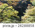 奥多摩 秋 紅葉の写真 26288858