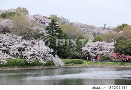 春の三ツ池公園 26291455