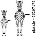 シマウマ 縞馬 動物のイラスト 26297179