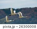 飛ぶ白鳥 26300008