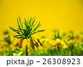 お花 フラワー 咲く花の写真 26308923