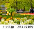 お花 フラワー 咲く花の写真 26315469