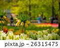 お花 フラワー 咲く花の写真 26315475