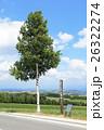 白樺 北海道 初夏の写真 26322274