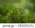 蝶 チョウ 蝴蝶の写真 26330151