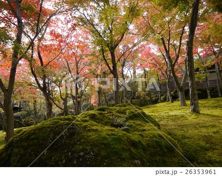 箱根の紅葉(箱根美術館) 26353961