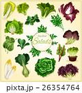 サラダ サラダ ベジタブルのイラスト 26354764