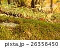 苔のある風景 26356450