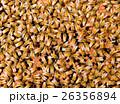 農業 農耕 ハチの写真 26356894